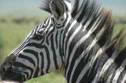 African Safari (Photo: Africa Adventure Consultants)