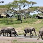 Global Basecamps introduces customizable Tanzanian Safaris