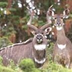 Ethiopian Wildlife