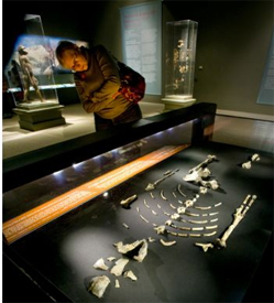Lucy at Bowers Museum (Photo: Orange County Register)