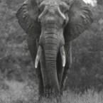 Images in Africa Safari