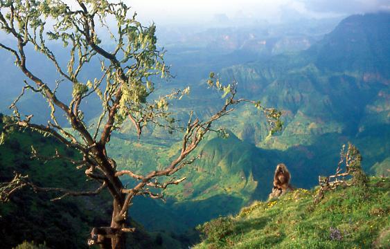 Semien Mountains National Park
