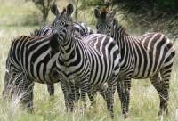 SNNP secures 100 million Birr from tourism
