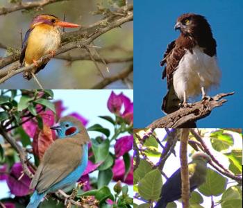 Birding in Ethiopia (Photo: blueskyethiopia.com)