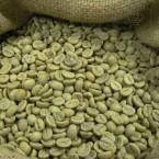 Coffee Export