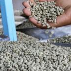 Ethiopian Coffee Resurgence