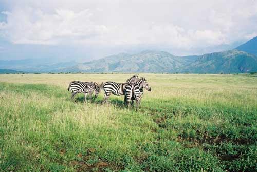 Zebras Nech Sar National Park (Photo: http://hem.bredband.net/) -