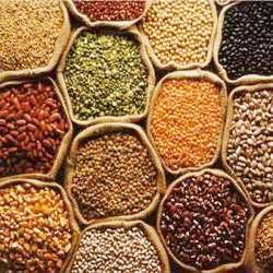 Oilseeds Export