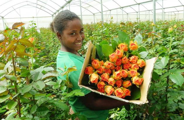 Ethiopian Floriculture
