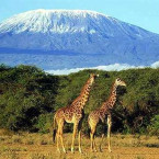Tanzania's Tourism Revenue could hit $16 billion by 2025