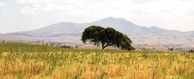 The beautiful Ethiopian countryside just east of Addis Ababa (credit: Elizabeth Egan)